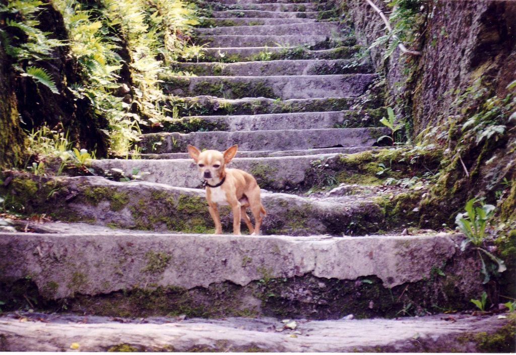 Oscar op de trap naar het dal bij Hornberg