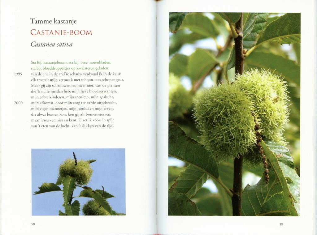 Bladzijden uit Florilegium Hofwijck
